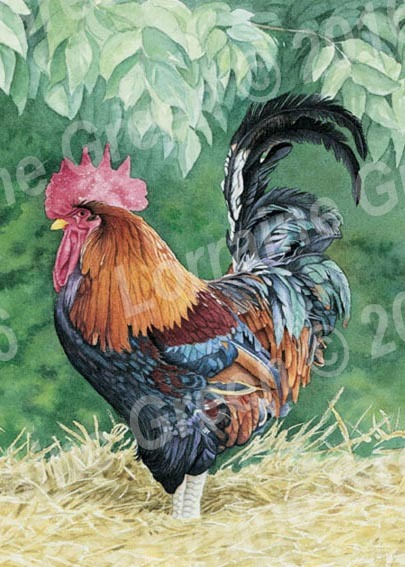 A6 Greetings card featuring a colourful cockerel