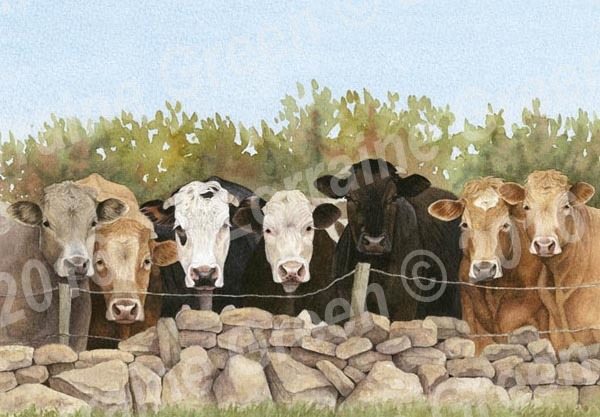 A6 Greetings card featuring 7 cows looking over a fence