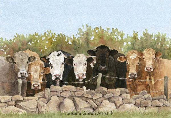 print taken from a watercolour painting of 7 cows looking over a fence