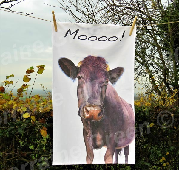 Moooo! A cotton tea towel featuring the 'Nosey Cow' image