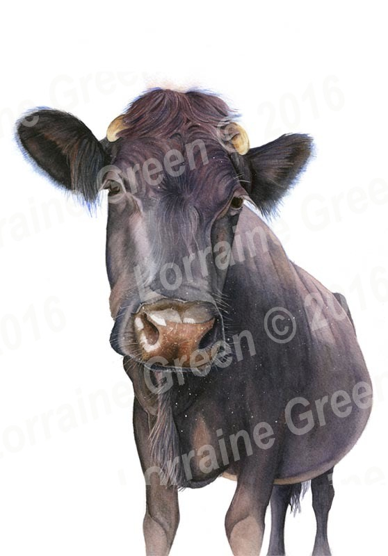 A6 Greetings card featuring a nosey cow