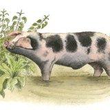 Piggy in a Pool Greetings Card