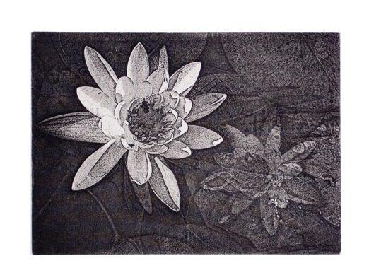 Water Lily - 5x7 Intaglio Print (non-toxic) 2009