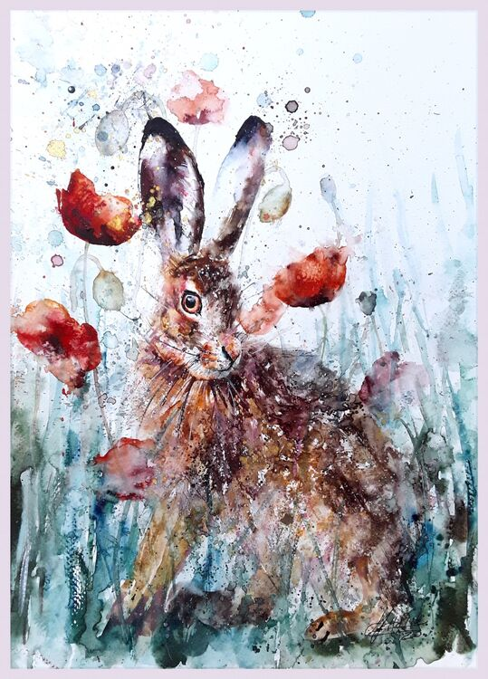 Hare poppy