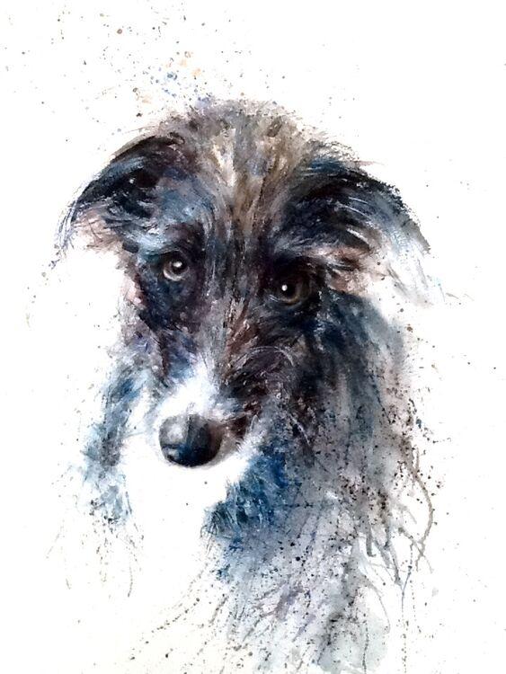 Pet portraits - my style