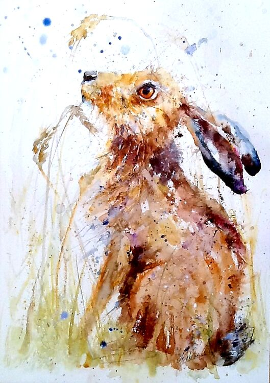 Hare with grasses