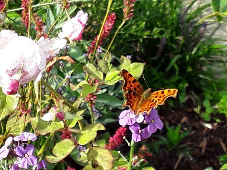 Lisa butterfly gardens