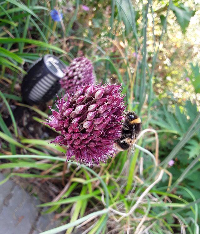Lisa's  bee garden