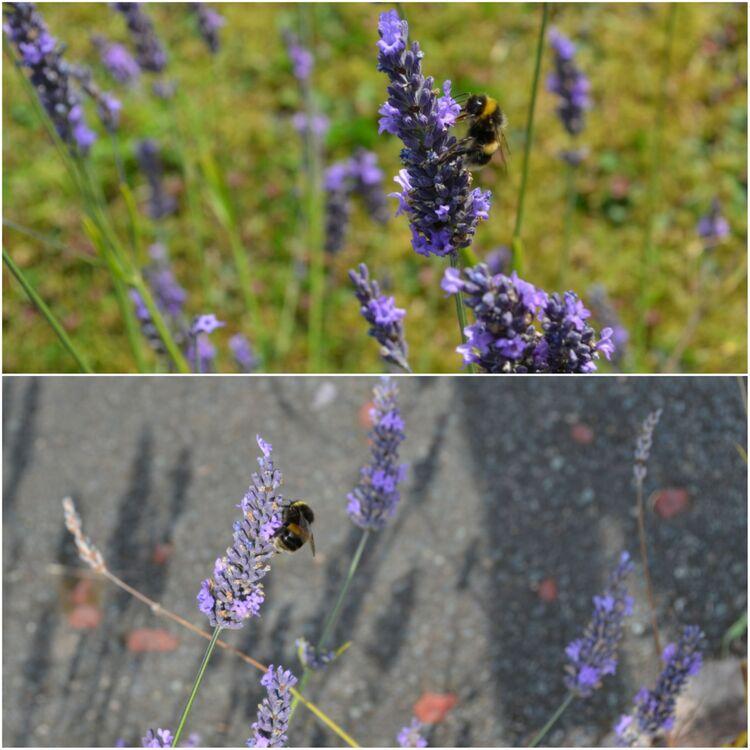 Lisa's bees photos