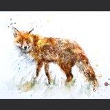 EXTRA IMAGE Foxy