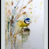 Blue tit SOLD