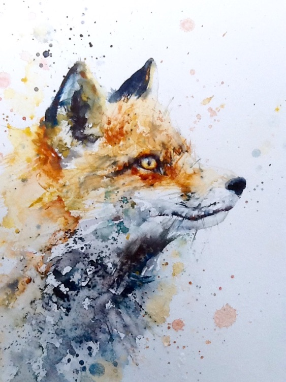 Extra image red fox