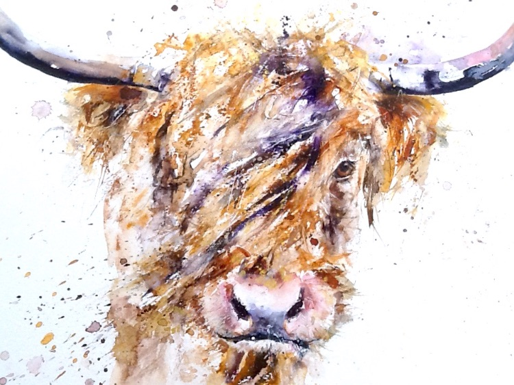 Extra image little shaggy coo