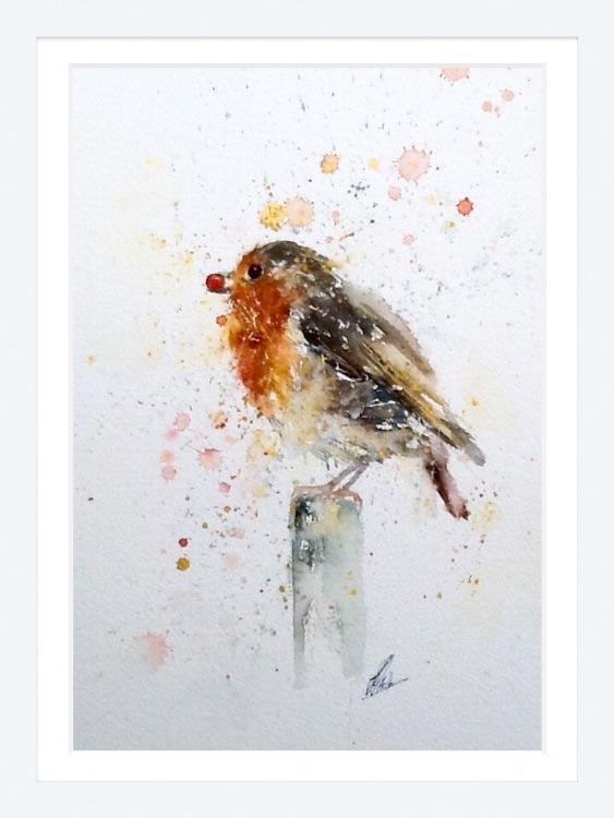 Little red robin 8/150