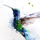Extra image Hummingbird