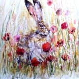 Hare in meadow ..