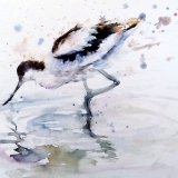 Avocet reflect