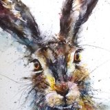 Century hare - close up