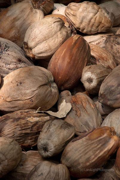 Maldives Coconuts