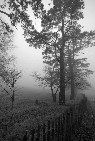 Mistley Village, in the Mist