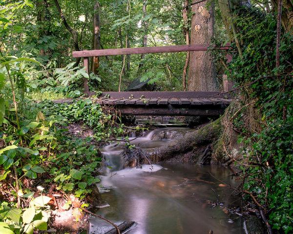 Belhus Woods Stream