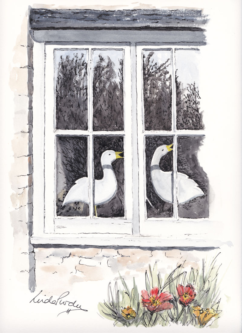 Geese in the Window