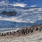 """""""Gentoo Penguin Colony""""First Prize"""