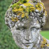 Lichen Hairstyle