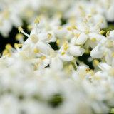 Multi-Floral Jumble