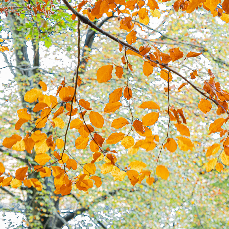 Autumn 2.