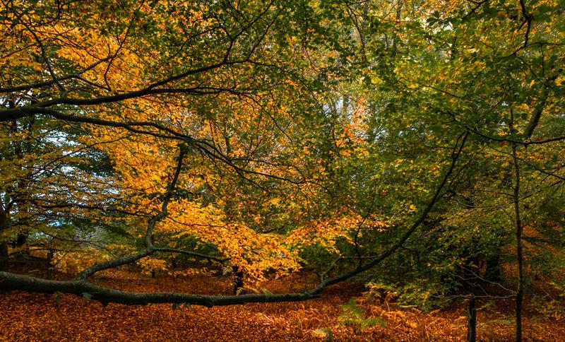 Autumn 3.