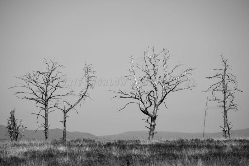 Dead Trees 3.