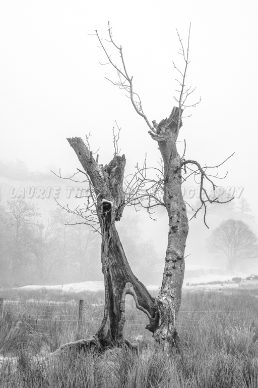 Foggy River Brathay Trees 1.