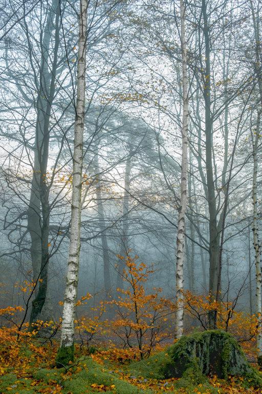 Misty Woods 2.