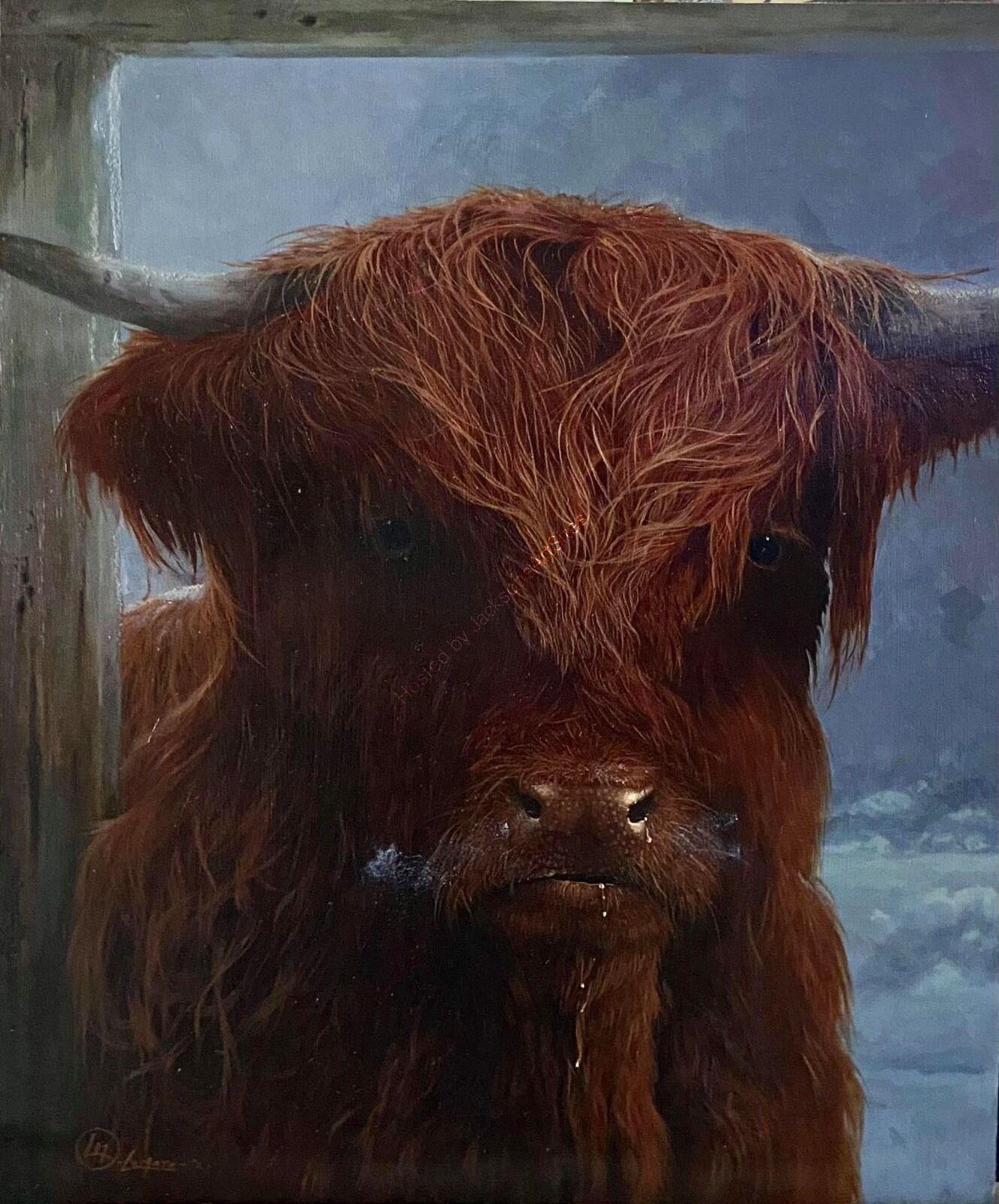 Highland cow II - In stable doorway