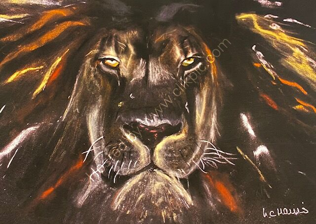 Lion in large A2 print