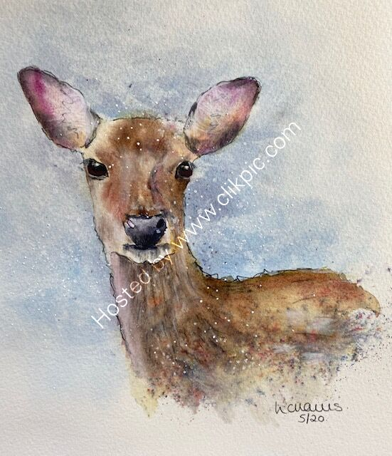Roe Deer card