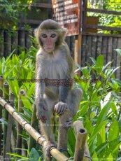 39 Monkey Island II, Sanya, China