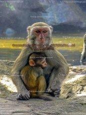 41 Monkey Island VI, Sanya, China