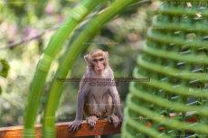 43 Monkey Island VI, Sanya, China