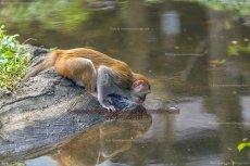 44 Monkey Island VII, Sanya, China