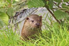 Otter2, BWC Surrey