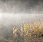 Mist on the Lake #2