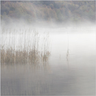 Mist on the Lake