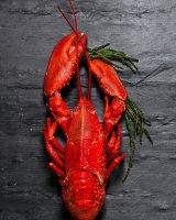 lobster-4057