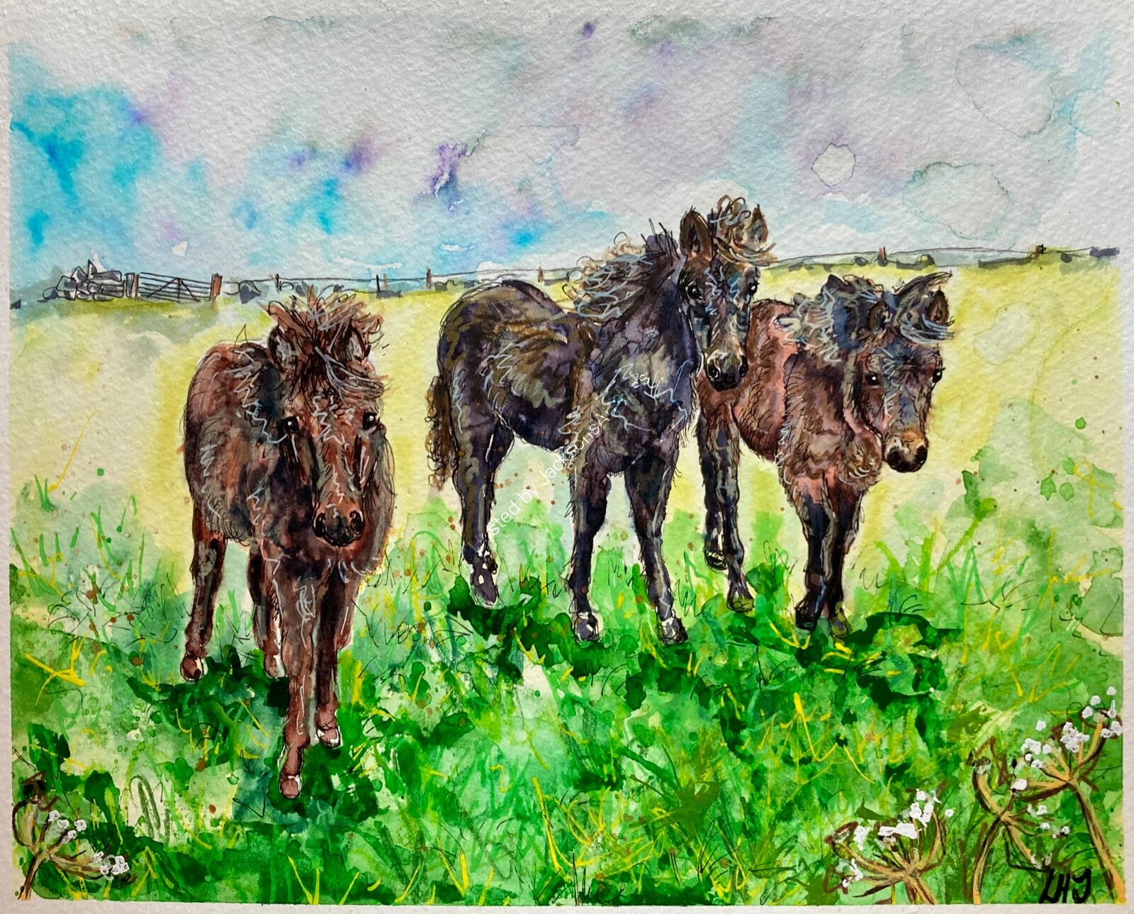 Nanjizal Ponies