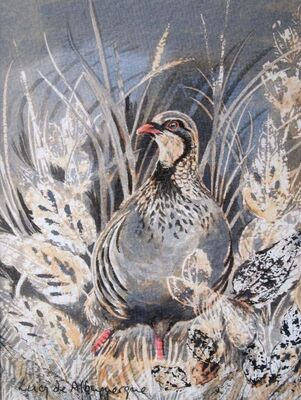 French partridge - giclee print