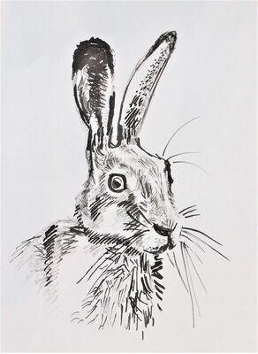 Hare Ink drawing
