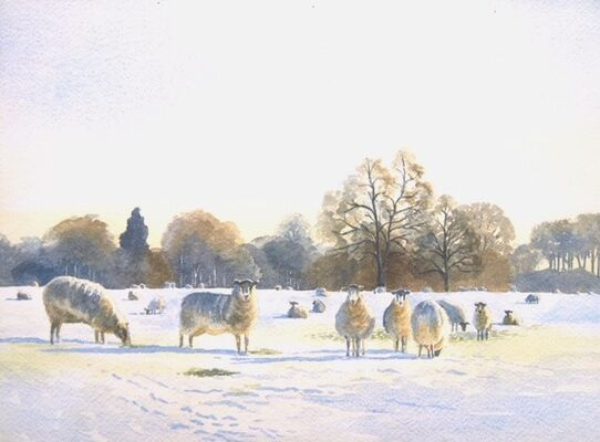 Sheep in the Snow watercolour