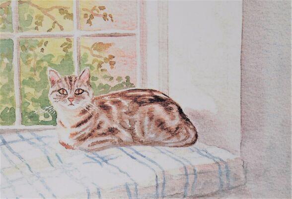 cat on window seat
